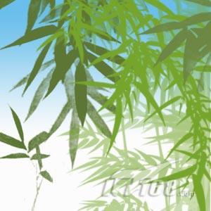 竹子立面手绘图