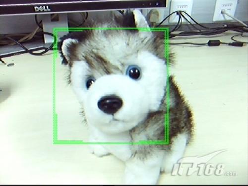 然而这个功能究竟好不好用,我们的小可爱真的能被相机捕捉到吗?