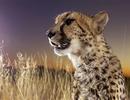 非洲大草原的野生动物